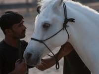 Speak Horse