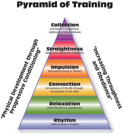 Dressage Training Pyramid